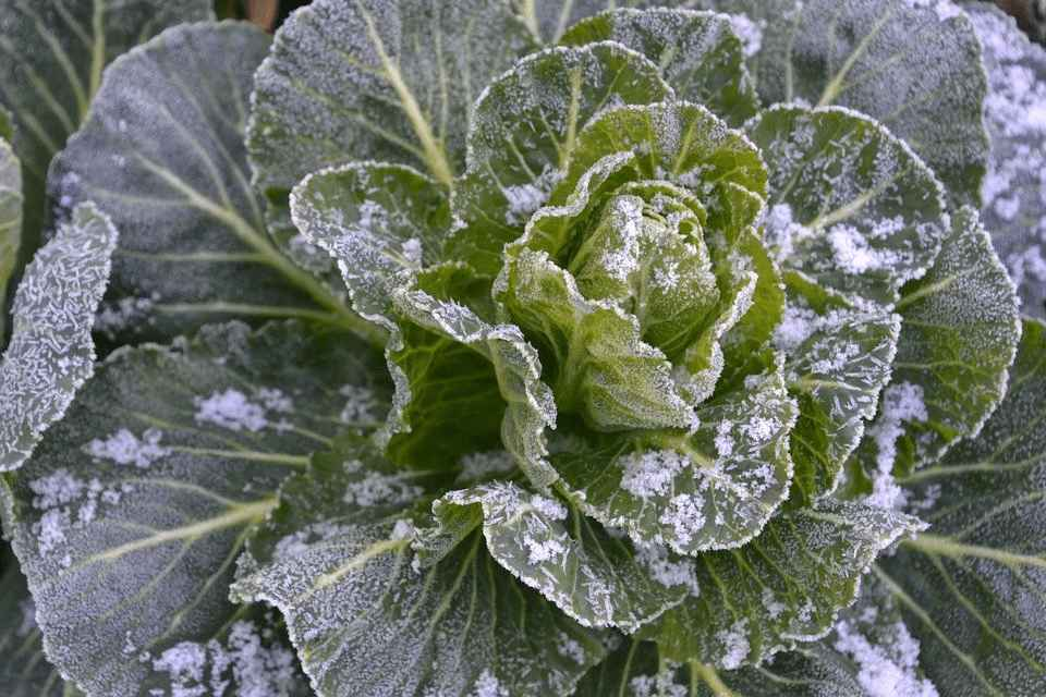 Vegetable Seeds To Plant In February